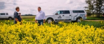 Two men standing in a canadian canola field with a pick up truck in the back ground
