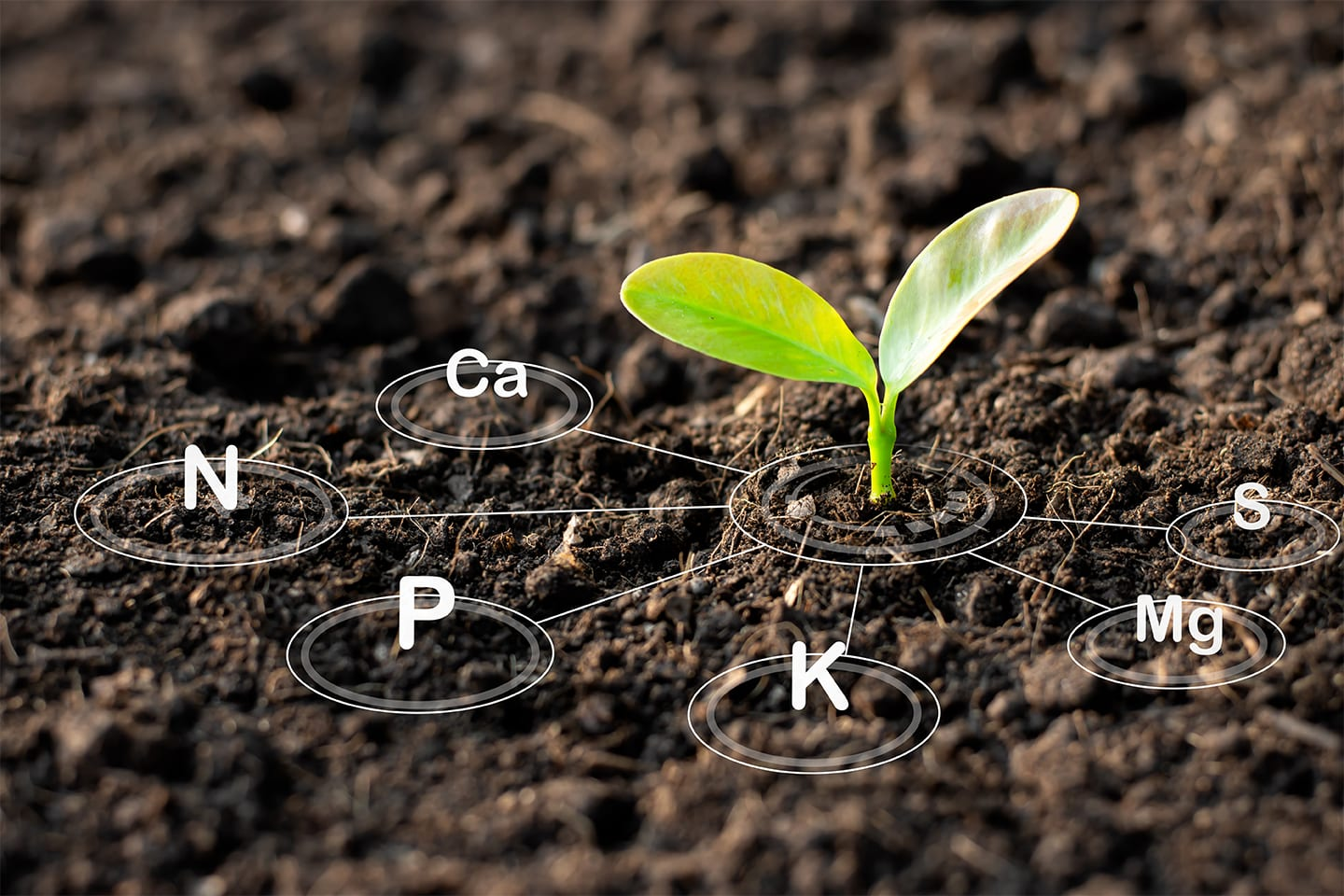 Plant sprouting in healthy soil